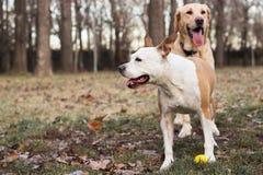 Two happy dog friends stock photo