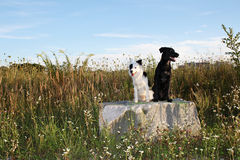 Two happy dogs (2). Two happy dogs sitting on a big stone in the nature Stock Image
