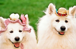 Two happy dogs. Dressed up for Oktoberfest Royalty Free Stock Photos