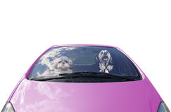 Two happy dogs drives the car Royalty Free Stock Photos