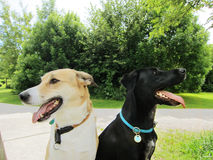 Two happy dogs in the park (3) Stock Images