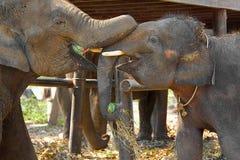 TWO HAPPY ELEPHANTS. Stock Photos