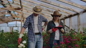 Two happy farmers working in a greenhouse with flowers using tablet computers to monitor and record crops for buyers and stock video