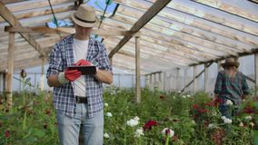 Two happy farmers working in a greenhouse with flowers using tablet computers to monitor and record crops for buyers and stock video footage