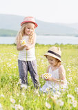 Two happy little girls collect daisies Stock Image