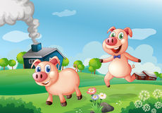 Two happy pigs at the farm Royalty Free Stock Photos