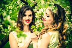 Two happy pretty girls staying under blossom apple tree Royalty Free Stock Image