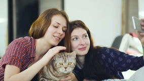 Two happy women friends lying in bed and making selfie with cat and have fun on bed at home stock footage