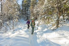 Two happy women traveler with backpacks walking in winter forest Stock Images