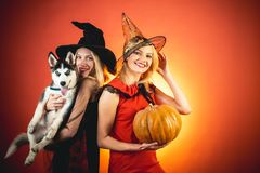 Photo of two young females with Halloween pumpkin and little dog Husky, having fun. Two happy young women in black and royalty free stock photos