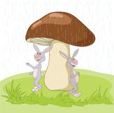Two  hares. Two gray hares under the big mushroom Stock Images