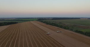 Two harvesters tresh wheat aerial view stock video