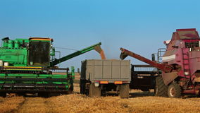 Two Harvesters are Unloading Grain to the Truck. Sunny day. Blue sky. Two harvesters are unloading grain to the truck in the field stock footage