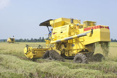 Two harvesting machine is used to harvest paddy Royalty Free Stock Photos