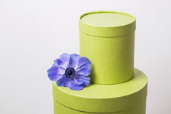 Two hat box pistachio color against the plastered wall. Flower Poppy anemone purple gradien Stock Photography