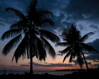 Two Hawaiian Palm Trees at Sunset on a Beach. Sunset behind the backdrop of two palm trees on the Big Island of Hawaii Stock Photos