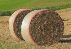 Two hay bales in the field Stock Image