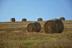 Two Hay bales on harvested field with many hay bales  in horizont. Straw bales on harvested field with  many hay bales  in horizon  and blue sky Stock Photo
