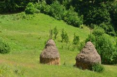Two haystacks on green meadow. Two haystacks on green hilly meadow near forest. Rural summer scene Royalty Free Stock Photo