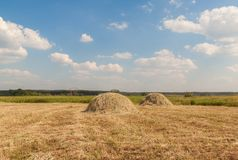 Two haystacks on the meadow Stock Photo