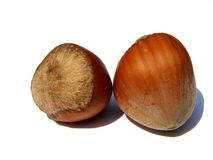 Two hazelnuts Royalty Free Stock Image
