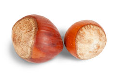 Two  hazelnuts Royalty Free Stock Photos