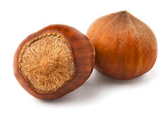 Two hazelnuts Royalty Free Stock Images