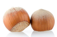 Two hazelnuts Stock Photography