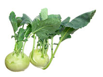 Two head of kohlrabi. Royalty Free Stock Photo