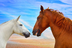 Two heads of beautiful horses Royalty Free Stock Photography