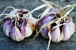 Two heads of garlic Royalty Free Stock Photos