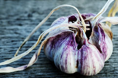 Two heads of garlic Stock Image