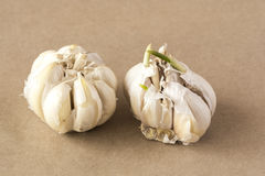 Two heads of garlic Stock Images