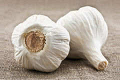 Two heads of garlic Royalty Free Stock Photo