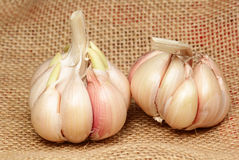 Two heads of garlic on a sacking Stock Images