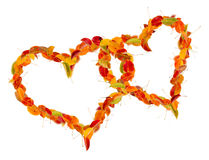 Two hearts of the autumn leaves Royalty Free Stock Images