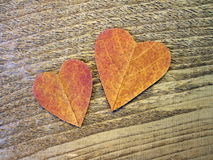 Two hearts cut from leaf Royalty Free Stock Photography