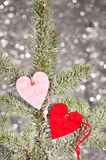 Two hearts on fir tree branch Stock Images