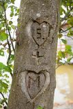 Two hearts with initials, carved in a tree bark Royalty Free Stock Photos