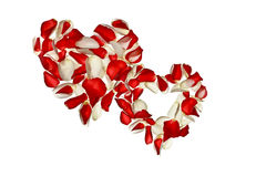 Two hearts with petals of roses on a white background Royalty Free Stock Photo