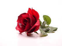 Two Hearts And A Rose. Red Rose with Two Hearts on the petal isolated on white background Stock Images