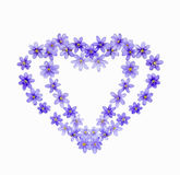 Two hearts of spring flowers hepaticas Royalty Free Stock Photos