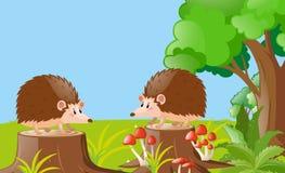 Two hedgehogs in the garden. Illustration vector illustration