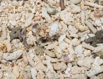 Two Hermit Crabs. In the rough sand texture on Mystery Island, Vanuatu Stock Images