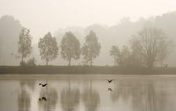 Two herons Stock Image
