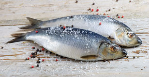 Two herrings Royalty Free Stock Images