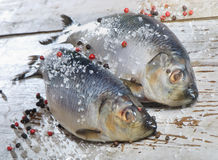 Two herrings Royalty Free Stock Photo