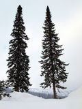 Two high fir trees Royalty Free Stock Images