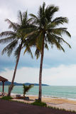 Two high harmonous palm trees. Sandy beach on Koh Samui. Two high harmonous palm trees and the rough sea Royalty Free Stock Image