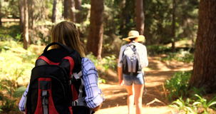 Two hiker women walking. In the forest at a music festival stock video footage